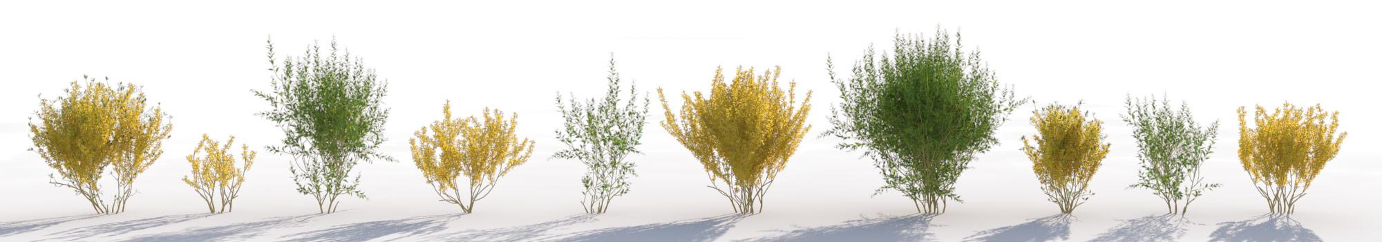 灌木丛3D模型MAX格式 VIZPARK – FORSYTHIA