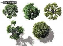 DOSCH 2D Viz-Images: Bird's Eye - Trees