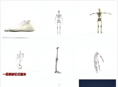 3D立体科技构建人体架构元素医学研究视频素材包