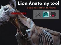 Cubebrush – Lion Anatomy