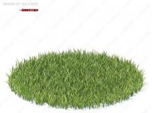 51组超精细野生花草植被3D模型合集 CGAxis第91期