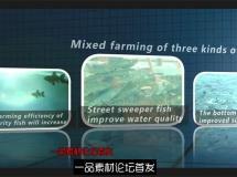 水产企业渔业罗非鱼养殖抓捕加工包装宣传片实拍高清视频素材