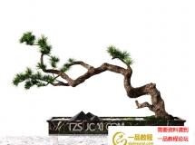 3D花草模型 中式松树盆景 下载