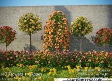 hd flowers 1 - roses
