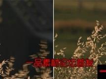 摇曳的草高清实拍视频素材1080P