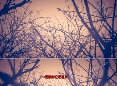 穿梭在荆棘树林之中的循环视频素材