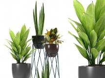 3D盆景植物  现代绿植盆栽组合3D模型下载