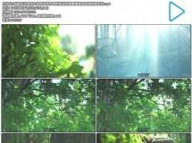 超赞阳光普照大地穿透树木映射视觉效果唯美画面高清视频实 ...