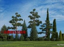 3DMentor – HQ Plants 2 高精度树木植物3D模型