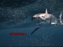 3dsmax海底世界的3D动画场景