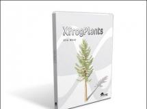 美国西部树木模型 高品质植物CG模型
