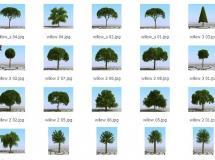 3DMentor – HQ Plants 1 高精度树木植物3D模型
