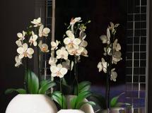 3D盆景植物 现代陶瓷兰花盆栽 3D模型下载