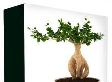 CONVEXSHAPES 3D POTTED PLANTS COLLECTION
