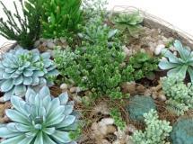 盆栽多肉质植物幼苗模型