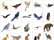100个精品动物模型 -一品素材单体模型库下载