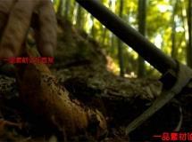 冬笋相关的美食高清实拍视频素材1080P