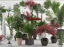 viz-people出品高精度室内外植物模型