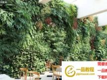 CG模型下载 室内绿圃植物3D模型 Maxtree – Plant Models