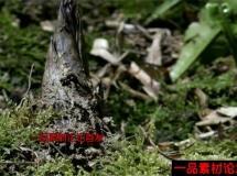 竹笋快速生长高清实拍视频素材