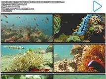 奇幻海底世界珊瑚海礁各种鱼类生物美丽海底景色特写高清视频实拍