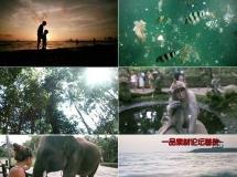 异国风情,森林,游艇,动物园