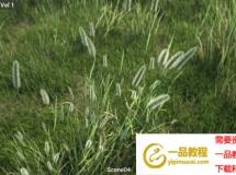 模型下载 草地植物3D模型 Maxtree – Plant Models