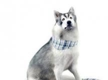 动物狗模型 Dog  高品质模型