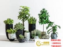 3D盆景植物 现代黑陶瓷绿植盆栽 3D模型下载