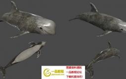大型海洋生物鲨鱼鲸鱼海豚3D模型