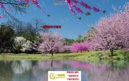 12组高精度樱花桃花丁香花等花树3D模型合集