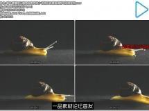 蜗牛缓慢爬行触角探索壳类小动物近距离高清特写视频实拍