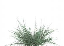 3dsky - 植物 1