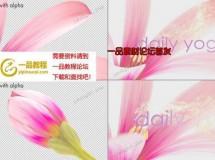 粉色百合花绽放出文字或标志AE模板