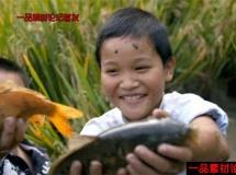 孩子在稻田里捉鱼的高清实拍视频素材1080p