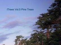 iTrees-05(松树)