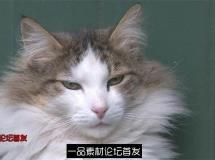 可爱小白猫动物姿态捕捉休息东张西望高清视频实拍