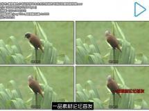 植物景色小鸟站在枝干上左右注视绿色环保近距离视频拍摄