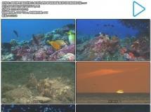 趣味神奇海底世界小鱼寻找食物珊瑚摇摆鲨鱼游动高清视频实拍