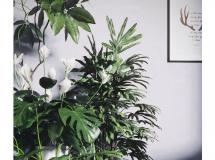 3D盆景植物  植物盆栽3D模型下载