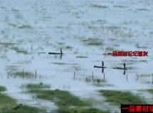 沼泽地里的小舟高清实拍视频素材1080P