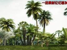 iTrees-热带树木