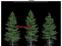 iTrees-04  (杉)