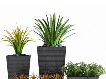 3D花草模型  植物盆栽3D模型下载