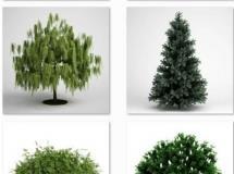 cgaxis植物模型收集9颗