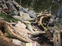 枯藤旧木老石植被环境3D模型UE4游戏素材资源合集 Evermotion UE4