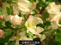 高清实拍视频素材 动物植物昆虫森林 大自然片花 大自然风 ...