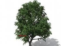 Vargo – 3D Model Trees
