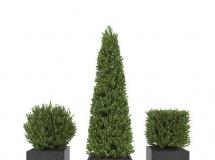 3D花草模型  户外植物盆景3D模型下载