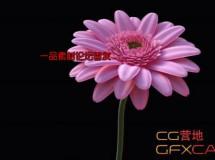 C4D雏菊花朵建模渲染教程 Gerbera Daisy C4D Modeling Tutorial